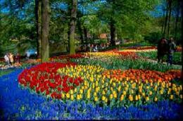 BENELUX z TREWIREM: KEUKENHOF - ogrody wiosenne świata Bruksela Belgia