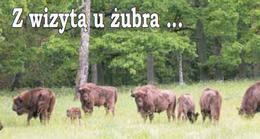 (Wycieczka szkolna) Białowieża - z wizytą u żubra, 1 dzień / NA ZAPYTANIE DLA GRUP